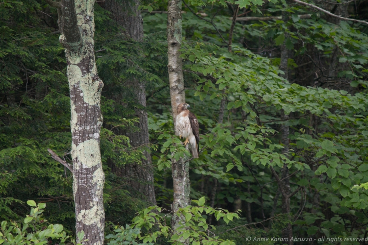 Hawk, Take 2